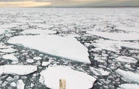 Polar 1
